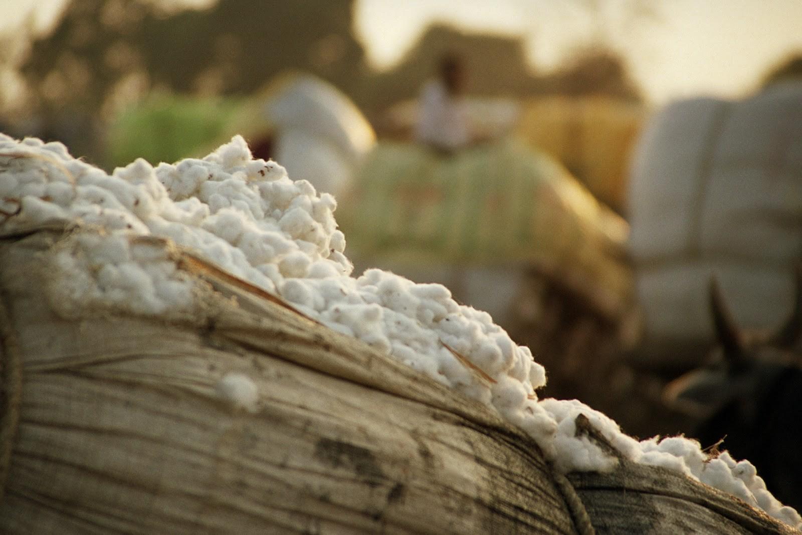 القابضة للغزل تطور محلجين فى المحلة ودمنهور بـ 30 مليون دولار