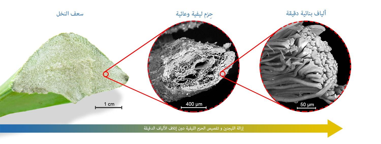 اول ألياف نسجية و ألياف للتدعيم من مخلفات نخيل التمر