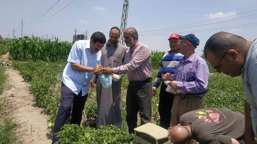 مسؤولو زراعة الإسماعيلية يتابعون زراعات القطن بمركز ومدينة القصاصين